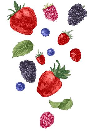 Hand drawn berries on white