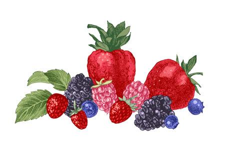 Disegnato a mano con frutti di bosco