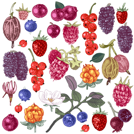 Large set of bright hand drawn berries. Vector illustration