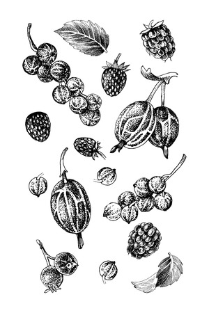 Background with black and white hand drawn berries - raspberry, red currant, gooseberry, wild strawberry, shadberry and mint leaves. Vector illustration