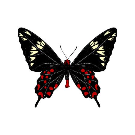 Hand drawn Crimson Rose butterfly butterfly. Vector illustration Çizim