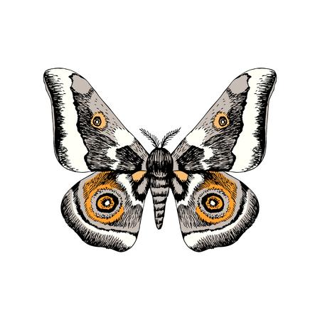 Papillon empereur africain dessiné à la main - Gonimbrazia Zambezina Vecteurs