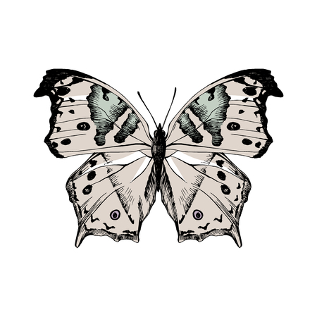 Hand drawn salamis parchassus - Mother-of-Pearl - butterfly