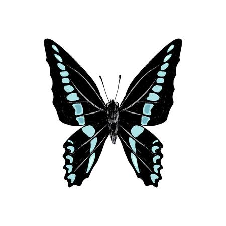 Hand drawn graphium sarpedon butterfly. Vector illustration Stock Illustratie