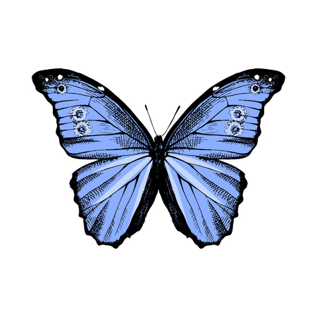 Hand drawn Blue Morpho butterfly