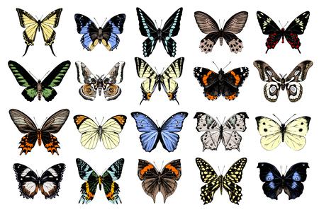 Collezione di farfalle disegnate a mano. 20 elementi unici. Illustrazione vettoriale