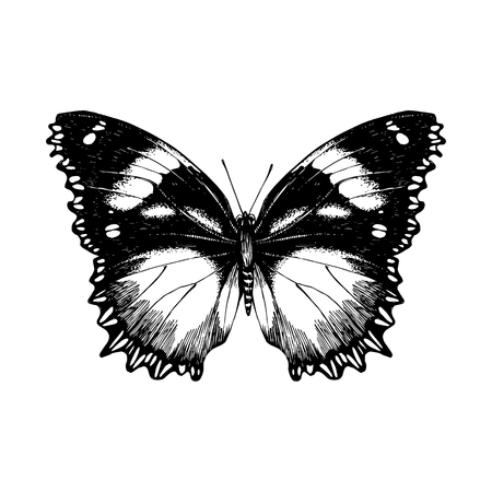 Hand drawn butterfly on white background