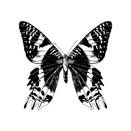 Hand drawn Madagascan Sunset Moth Illustration
