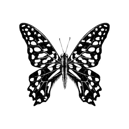 Hand drawn Tailed Jay Butterfly - Graphium agamemnon Иллюстрация