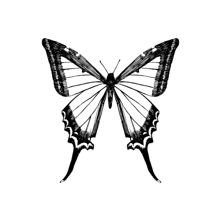 Hand drawn yellow swallowtail butterfly. Vector illustration