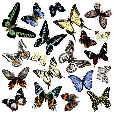 Hand drawn butterflies collection. 20 unique elements. Vector illustration Çizim