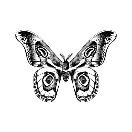 Hand drawn black and white butterfly Vetores