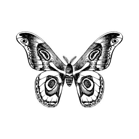 Handgezeichneter Schwarz-Weiß-Schmetterling Vektorgrafik