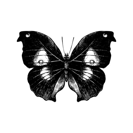 Hand drawn butterfly on white background. Vector illustration  イラスト・ベクター素材