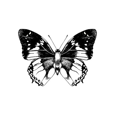 Hand drawn black and white butterfly. Vector illustration