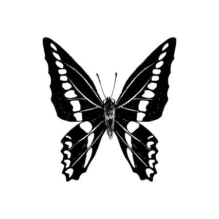 Hand drawn graphium sarpedon butterfly. Vector illustration Çizim