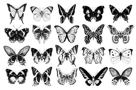 Hand drawn black and white butterflies collection. 20 unique elements. Vector illustration