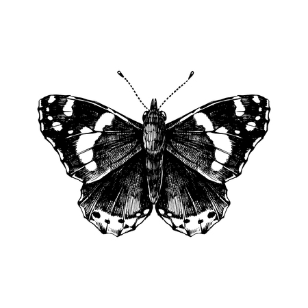 Hand drawn red admiral butterfly.  イラスト・ベクター素材