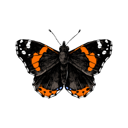 Colorful hand drawn red admiral butterfly. Vector illustration