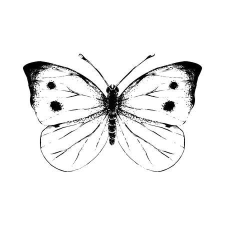 Hand drawn small white butterfly. Vector illustration