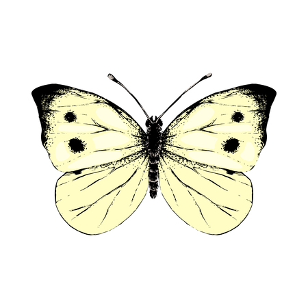 Colorful hand drawn small white butterfly. Vector illustration  イラスト・ベクター素材