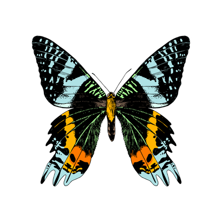 Colorful hand drawn Madagascan Sunset Moth . Vector illustration