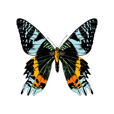 Colorful hand drawn Madagascan Sunset Moth . Vector illustration