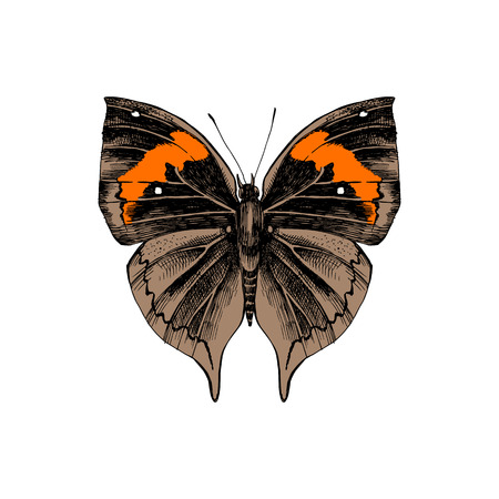 Colorful hand drawn orange oakleaf or dead leaf - Kallima inachus - butterfly