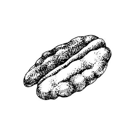 Hand drawn pecan nut. Illustration
