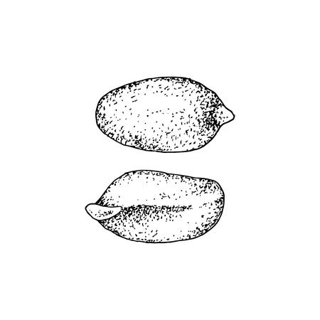 Hand drawn peanuts. Reklamní fotografie - 121898634