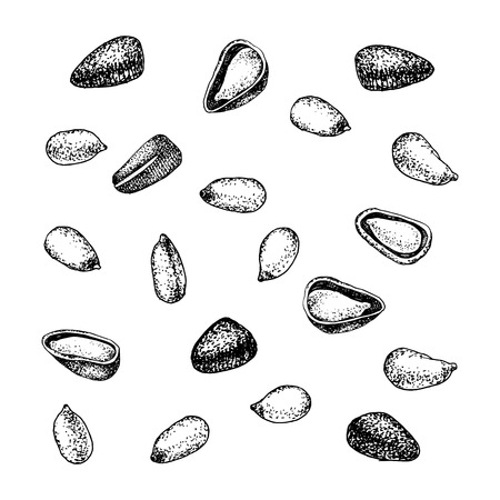Pine nuts isolated on white Illustration