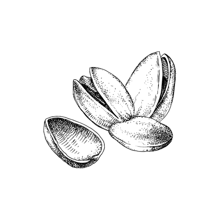 Hand drawn  of pistachio nuts