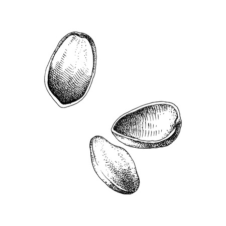 Hand drawn of pistachio nuts falling Stock fotó - 121898635