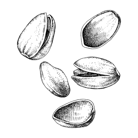 Hand drawn of pistachio nuts falling Çizim