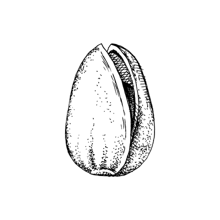 Hand drawn pistachio nut in a shell isolated on white