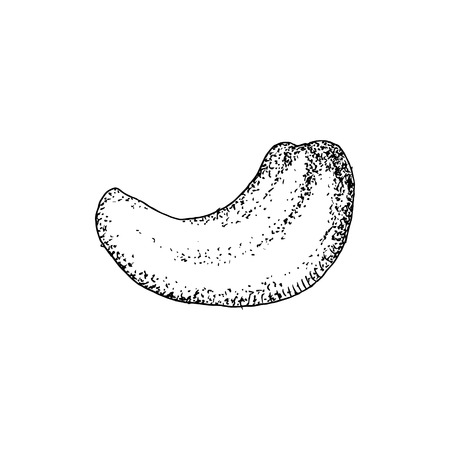 Noix de cajou dessinée à la main isolée sur fond blanc. Illustration vectorielle