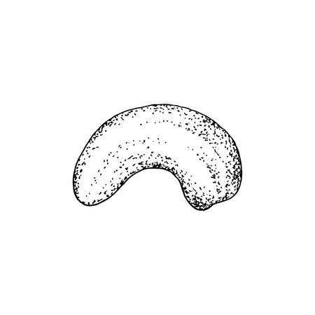 Hand drawn cashew nut isolated on white background. Vector illustration