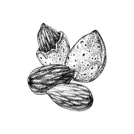 Handgezeichnete Mandeln