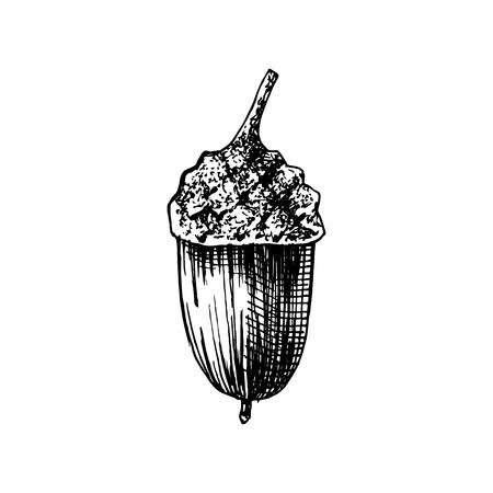 Hand drawn acorn