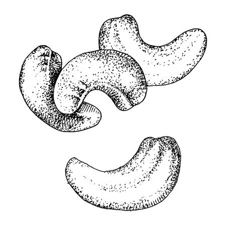 Noix de cajou dessinées à la main isolées sur fond blanc. Illustration vectorielle