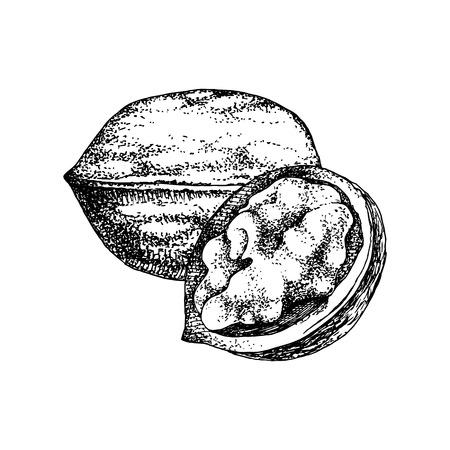 Hand drawn walnut nuts