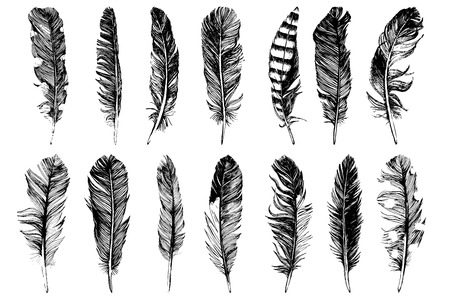 14 hand drawn feathers isolated on white background. Vector illustration