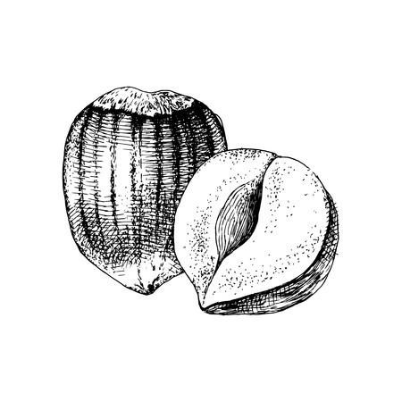 Hand drawn hazelnuts