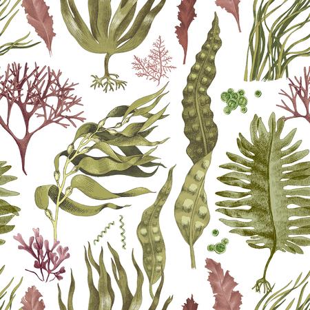 Patrón sin fisuras con algas comestibles dibujadas a mano. Ilustración vectorial