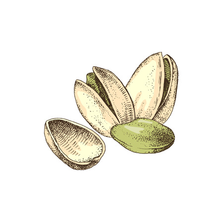 Hand drawn vector illustration of colorful pistachio nuts
