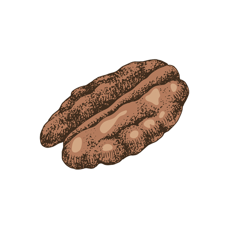 Hand drawn colorful pecan nut. Vector illustration in retro style