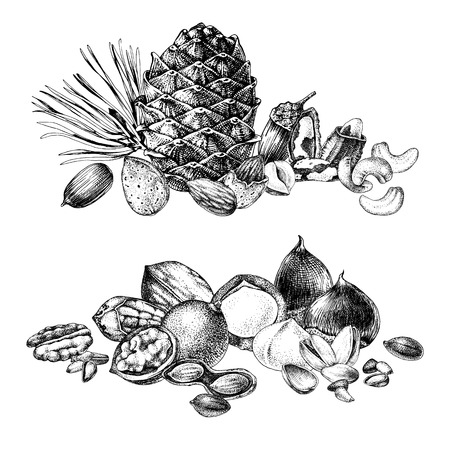 2 borders with hand drawn edible nuts. Vector illustration