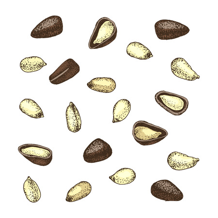 Colorful pine nuts isolated on white background. Vector illustration Stock Illustratie