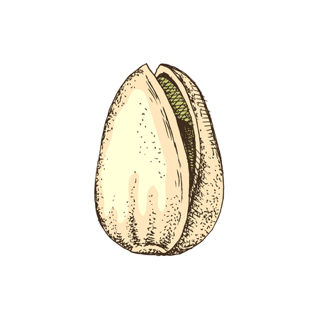 Hand drawn colorful pistachio nut in a shell isolated on white background. Vector illustration