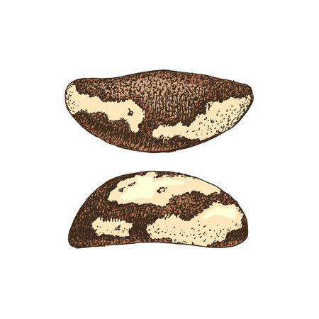 Hand drawn brazil nuts Banque d'images - 123302684